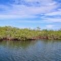 Mangrove forest.- Belize Barrier Reef System