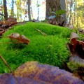 Closeup of a mossy rock along the trail.- Old Atlanta Park Nature Trail