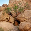 Along the ridge. - Balanced Rock via Grapevine Hills Trail