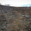 The trail contains a couple sections that pass through uneven trail lined by foliage.- Brúarfoss