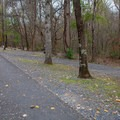 The outside of the A Loop (situated away from the river) is not as level as the rest of the sites.- Gee Campground