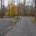 The river-adjacent side of the A Loop.- Gee Campground