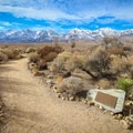 The museum's Native Plant Garden is a very short and interesting loop along the trail.- Eastern California Museum Trail