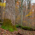 Some of the giants along the upper loop. - Joyce Kilmer Memorial Forest Loop Trail