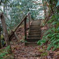 Some of the steps along the lower loop trail. - Joyce Kilmer Memorial Forest Loop Trail