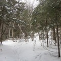 Returning to the loop point.- Castle Rock Snowshoe