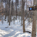 Follow the blue blazes to get to Coney Mountain.- Coney Mountain Snowshoe