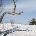 The trees dissipate at the top of Coney Mountain.- Coney Mountain Snowshoe