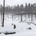 A clearing home to beavers.- Poke-O-Moonshine Snowshoe