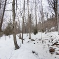 A clearing in the snow melted by water runoff.- Poke-O-Moonshine Snowshoe