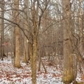 A small holiday surprise.- Genesee Riverway Trail at Seneca Park