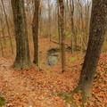 A small creek winds along below the Camp Creek Trail.- Camp Creek Trail