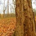 Camp Creek Trail.- Camp Creek Trail