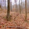 The Camp Creek Trail wraps around a small hillside.- Camp Creek Trail