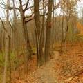 The Schoen Creek Trail follows a ravine.- Schoen Creek Trail