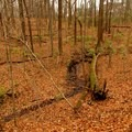 A small steam along fallen log.- Schoen Creek Trail