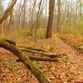 Gnarled logs along the Schoen Creek Trail.- Schoen Creek Trail