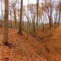 The Schoen Creek Trail alongside a ravine.- Schoen Creek Trail