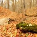 A gnarled bridge along the Schoen Creek Trail.- Schoen Creek Trail