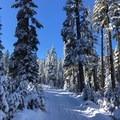 Snowcapped trees at Bennett Pass Sno Park.- Bennett Pass Sno Park