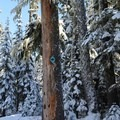 A marker on tree determines direction of the trail.- Bennett Pass Sno Park