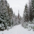 The Stewardship Trail connects with a ski/bike trail for a short section around Round Lake.- Stewardship Trail
