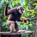 A monkey feeding, among other things, at Camp Leakey.- Camp Leakey