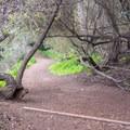 The trail passes through a small grove.- Annie's Canyon Trail via North Rios Trail