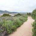 Annie's Canyon Trail follows the southern perimeter of San Elijo Lagoon.- Annie's Canyon Trail via North Rios Trail