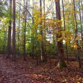 Fall leaves decorate the trail.- Old Atlanta Park Nature Trail