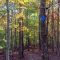 Blue diamond blazes mark the trail.- Old Atlanta Park Nature Trail