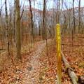 Camp Creek Trail with trail signage.- Camp Creek Trail