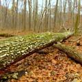 Fallen forest foliage on Camp Creek Trail.- Camp Creek Trail