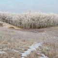 A forest in winter hibernation.- Bennett-Cottonwood Loop via Maah Daah Hey Trail