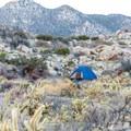 Culp Valley Primitive Campground.- Culp Valley Primitive Campground