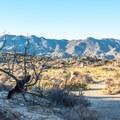 The San Ysidro Mountains frame the horizon.- Culp Valley Loop