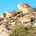 Culp Valley has numerous bouldering opportunities.- Culp Valley Loop