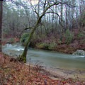 Tree leaning over the swollen Tallulah River. Tallulah River Campground.- Tallulah River Campground