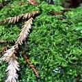 The flora of Mount Tamalpais East Peak.- Mount Tamalpais East Peak via Stinson Beach