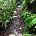 Steep Ravine Trail on Mount Tamalpais East Peak.- Mount Tamalpais East Peak via Stinson Beach