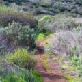 The trail ascends a steep hill.- Copper Creek Trail via Whiptail Trail