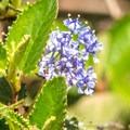 Wildflowers blooming along Copper Creek Trail.- Copper Creek Trail via Whiptail Trail