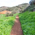 The trail loops back to the trailhead.- Copper Creek Trail via Whiptail Trail