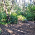 A typical campsite in Baker Beach Campground.- Baker Beach Campground