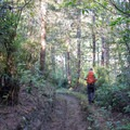 Lily Lake Trail is well worn by hikers and horseback riders.- Lily Lake Trail