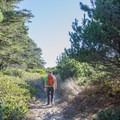 Lily Lake Trail in the dunes. - Lily Lake Trail