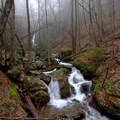 The fog rolls in over Beech Creek.- Beech Creek Loop Trail to Big Scaly Mountain