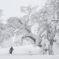 With heavy snows commonplace, Mount Furano is a wintry landscape.- Mount Furano