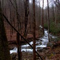 Beach Creek whitewater cuts through a dreary overcast day.- Beech Creek Loop Trail to Big Scaly Mountain