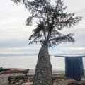 "Tropical vibes. A Sombrio ""palm tree.""- Sombrio Beach"